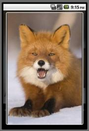 FOX AND RABBIT Puzzle