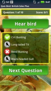 Quiz Bird: British Isles
